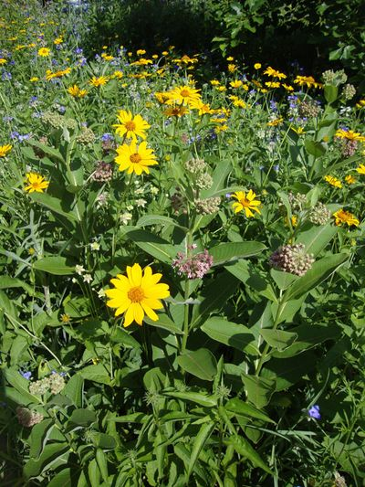 Prairie flowers.