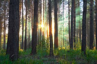 Bigstock-sunset-in-the-woods-15081113