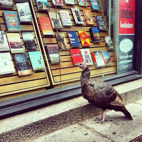 Turkey in Harvard Square