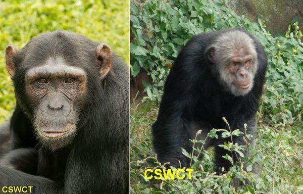 Pasa and Tumbo