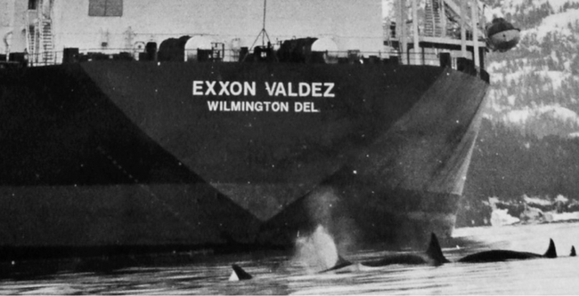 Kaj's group swims beside the grounded and leaking Exxon Valdez on the day after the disaster, on Bligh Reef. (Rosemary Kaul / Los Angeles Times)