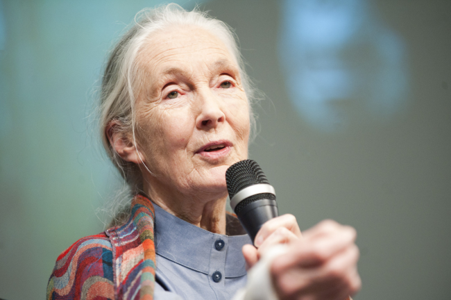 Jane Goodall speaks at the World Bank in 2011 / courtesy the World Bank Photo Collection