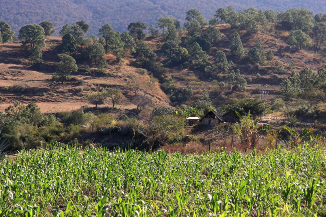 Home and corn field, Oaxaca, Mexico by Flickr user Lon&Queta