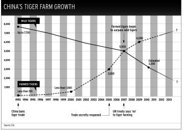 Tiger-farming-chart-360x255