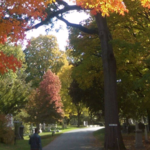In Praise of Mount Auburn's Social Gathering of Trees