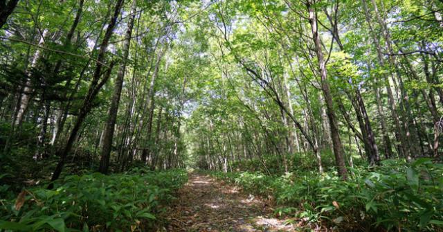 Hokkaido Forest Path