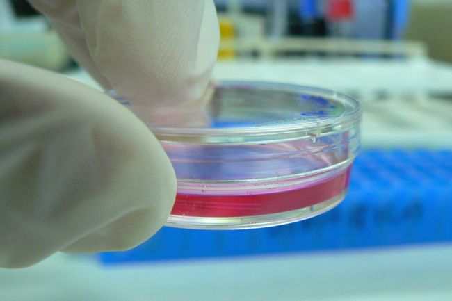 Cell culture in a tiny Petri dish