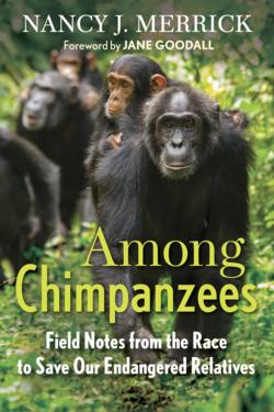 Among Chimpanzees