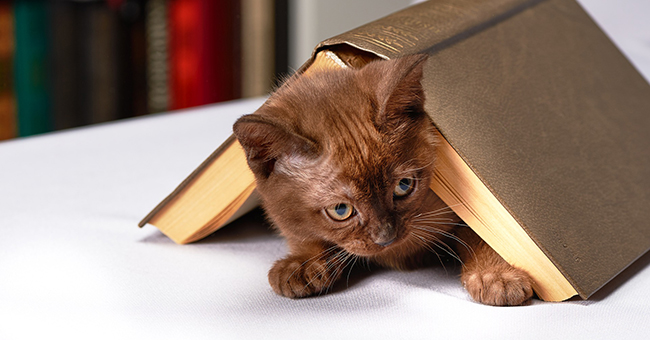 Kitten and book